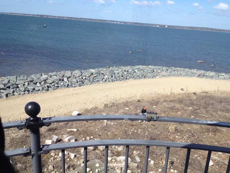 Bird Island Ecosystem Restoration